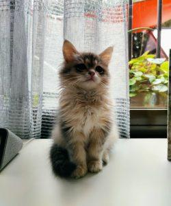 Una escritora con gato